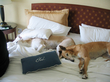 pet friendly hotels Scottsdale