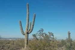 scottsdale hiking trails dog park in scottsdale arizona